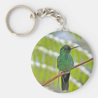Green Hummingbird Photo Key Chain