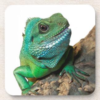 Green iguana beverage coaster