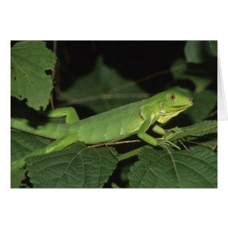 Green Iguana, (Iguana iguana), Common Iguanas Card