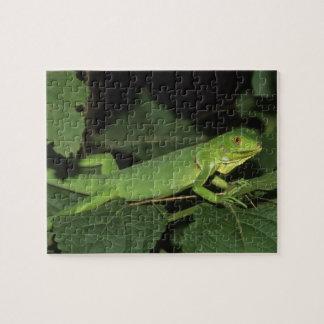 Green Iguana, (Iguana iguana), Common Iguanas Jigsaw Puzzle