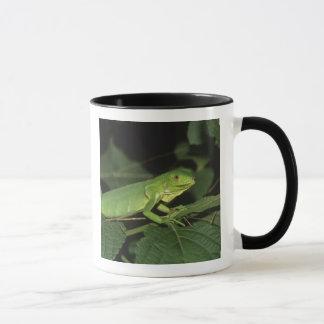 Green Iguana, (Iguana iguana), Common Iguanas Mug