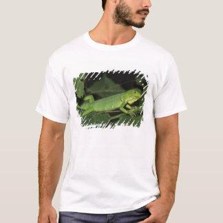 Green Iguana, (Iguana iguana), Common Iguanas T-Shirt