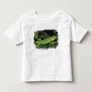 Green Iguana, (Iguana iguana), Common Iguanas Toddler T-Shirt