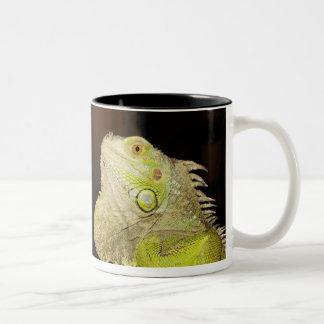 Green Iguana(Iguana Iguana) Two-Tone Coffee Mug