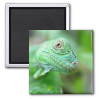 Green Iguana Lizard Reptile On Leaf Magnet