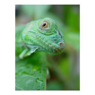 Green Iguana Lizard Reptile On Leaf Poster