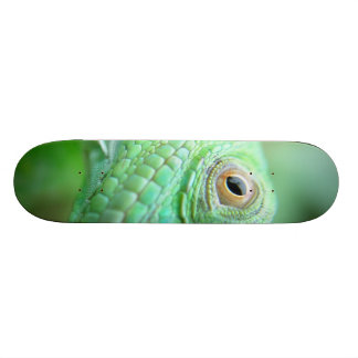 Green Iguana Lizard Reptile On Leaf Skateboard