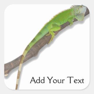 Green Iguana on White Sticker