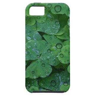 Green Irish Clover iPhone 5 Case