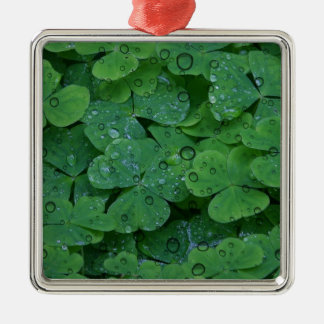 Green Irish Clover Silver-Colored Square Decoration