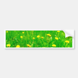 Green.jpg Bumper Sticker