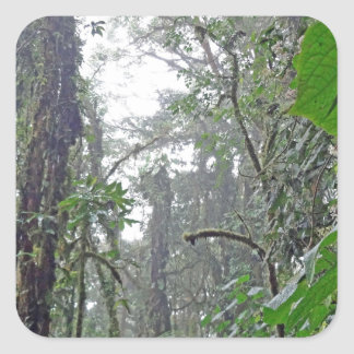 green jungle in costa rica square sticker