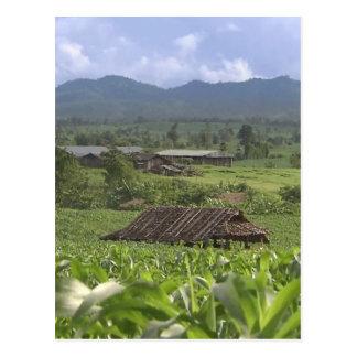Green Landscape photography Yunnan Province China Postcard