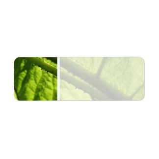 Green Leaf, focused on spiny center.