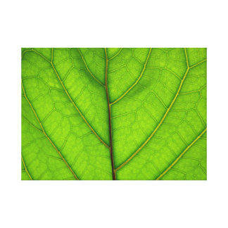 Green Leaf Macro Canvas Print