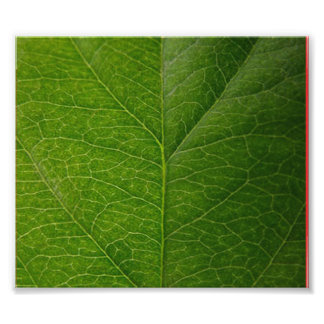 Green Leaf Photo Print