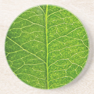 green leaf sandstone coaster