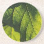 Green Leaf Veins Beverage Coasters