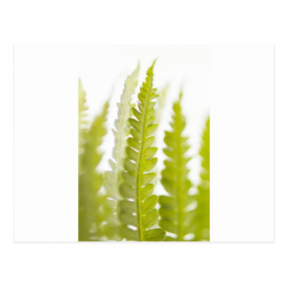 Green Leaves, Green Plant, Plants, Earth Postcards