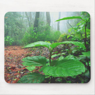 Green Leaves in Jungle on a Rainy day Mouse Pad
