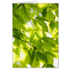 Green  leaves in spring card