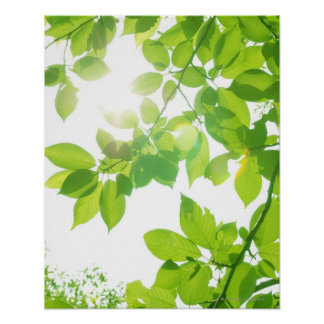 Green leaves in sunlight, close-up poster