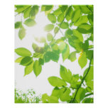 Green leaves in sunlight, close-up print