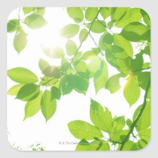 Green leaves in sunlight, close-up square sticker