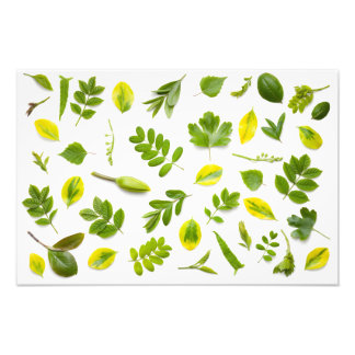 Green Leaves Isolated on White Background Photo Art