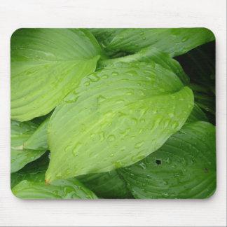 green leaves rain drops mousepad