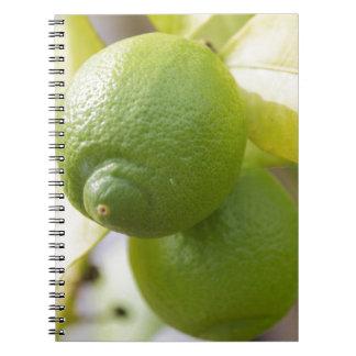 green lemon spiral notebook