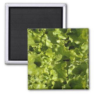 Green lettuce square magnet