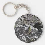 Green Lizard On A Rock. Key Chains