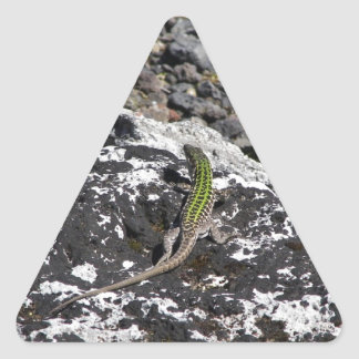 Green Lizard On A Rock. Triangle Sticker
