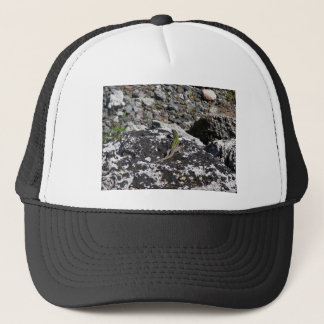 Green Lizard On A Rock. Trucker Hat