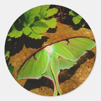 Green Luna moth Round Sticker