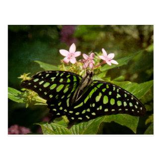 Green Malachite Butterfly Postcard