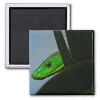 green mamba magnet
