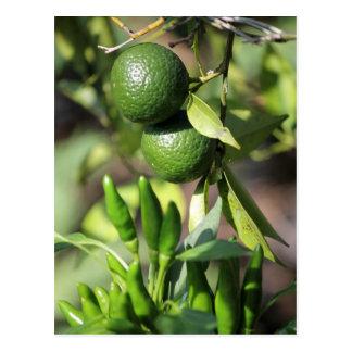 green mandarin and chili postcard