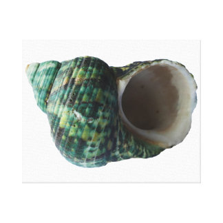 Green Marine Mollusk Shell Wrapped Canvas Print