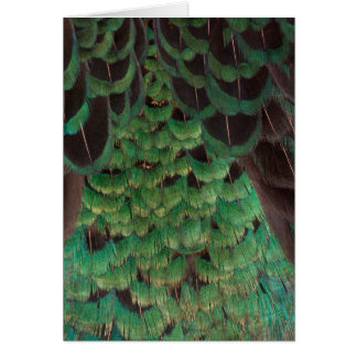Green Melanistic Pheasant Feathers Card