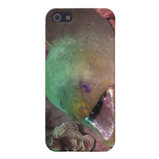 Green Moray Eel iPhone case Case For The iPhone 5