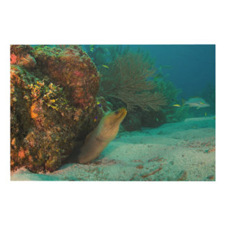 Green Moray in Reef Wood Wall Art
