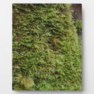 Green Moss Plaque