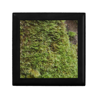 Green Moss Small Square Gift Box