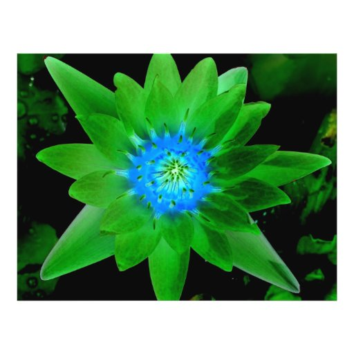 green neat water lily flower against green leaves flyer design