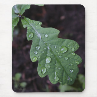Green oak leaf in rain mouse mat