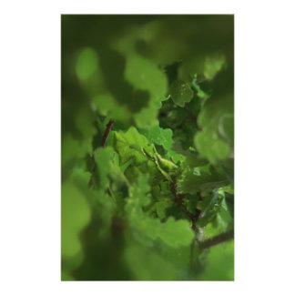 Green Oak Leaves Gap in the branches Full Color Flyer