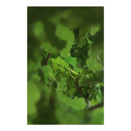 Green Oak Leaves. Gap in the branches. Full Color Flyer