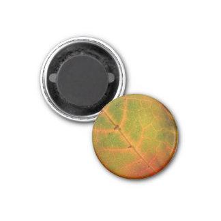 Green & Orange Autumn Leaf Magnet